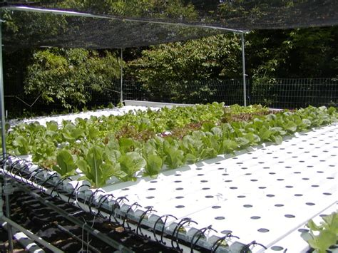 hydroponic gardening images