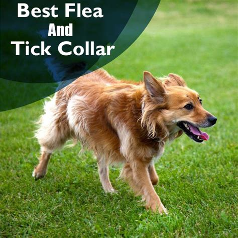 best tick collar for dogs best flea and tick collar