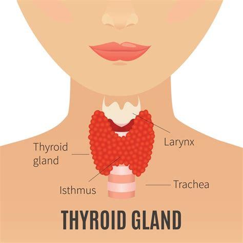 tiroide alimentazione ipotiroidismo tiroide rimedi naturali per chi soffre di ipotiroidismo e