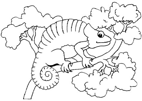 Mixed Up Chameleon Coloring Page by Chameleon Colouring Pages
