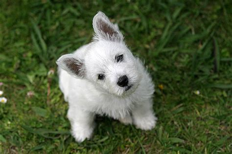 choosing a puppy how to choose a breed make the best choice top tips