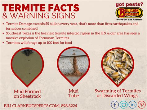 Winter Weather Leaves Homes Susceptible to Termite
