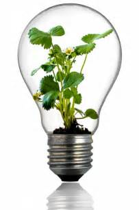 Light Bulb Planter by Green Plant In The Light Bulb Free Stock Photo