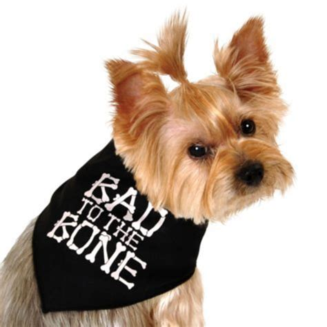 are bones bad for dogs bad to the bone bandana city my needs this its stuff to buy