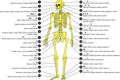 human bones diagram 206 bones of the diagram organ anatomy