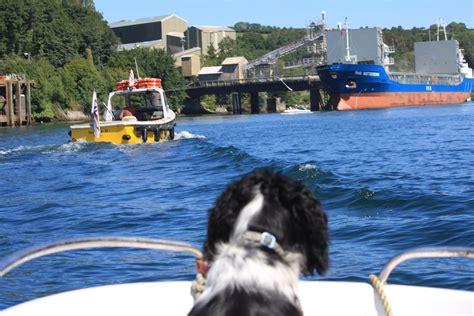 dog boat ladder pontoon top 3 dog ladders for boats dog n treats