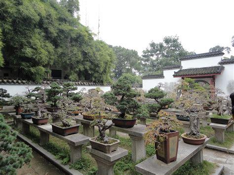 giardini bonsai giardino di bonsai in cina saper vivere