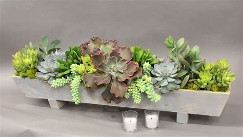 Whats New At The Succulent by Succulent Arrangement