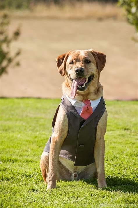 The Best Man   Weddings at Youngberg Hill   Weddings   Dog