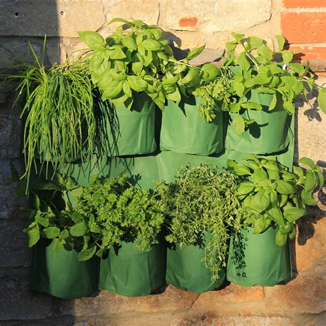 wall herb planter herb wall planter haxnicks