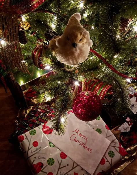 present under the christmas tree free stock photo public
