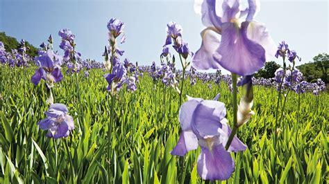 Junder Iris produkte mit iris spenden feuchtigkeit weleda