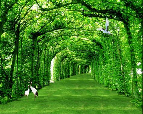 beibehang  wallpaper pemandangan alam segar warna