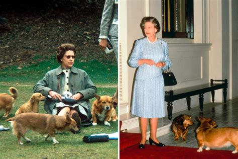 the queen s corgi queen elizabeth corgis why the queen owns so many corgis reader s digest