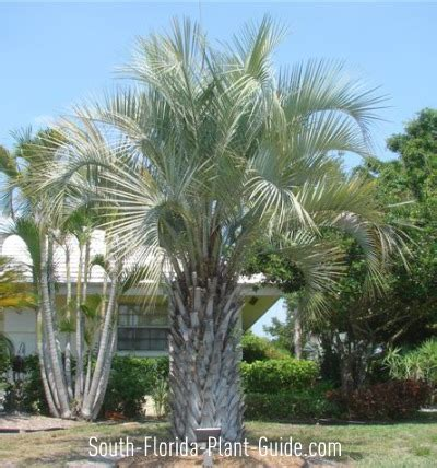What Is A Ranch Style House Pindo Palm