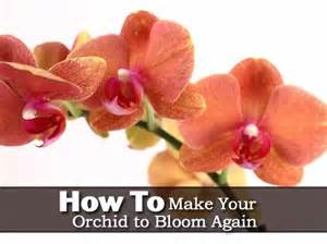 how to make your orchid to bloom again