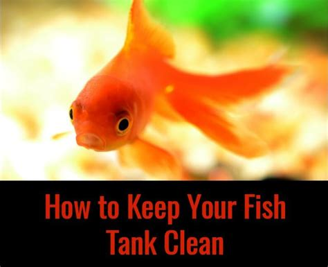 how to keep how to keep your fish tank clean pbs pet travel