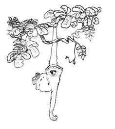 rainforest coloring pages rainforest coloring pages coloring pages to print