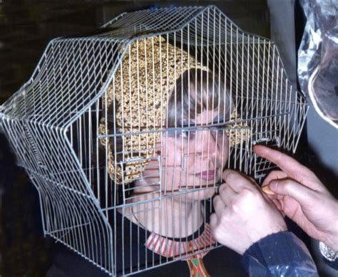 donna in gabbia looking glass uno sguardo tutto al femminile espoarte