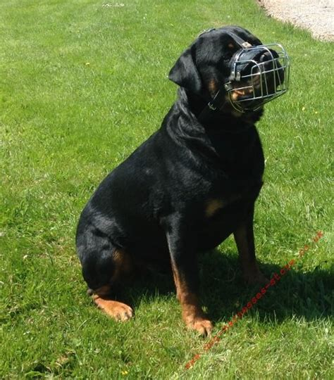 rottweiler muzzle wire muzzle uk top quality arrival in millenium 163 29 25
