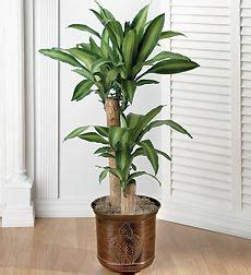 common tropical house plant identification tropical house plants identifying common low light buy indoor