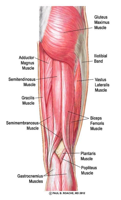 hamstring muscles diagram sequences jason crandell vinyasa method
