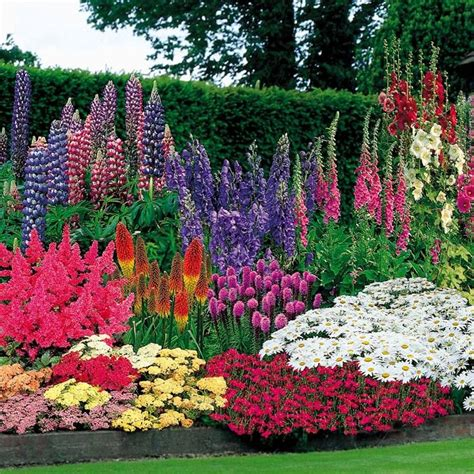 Bright Garden Flowers 20 Best Ideas About Colorful Flowers On What Color Is Violet Purple Plants And