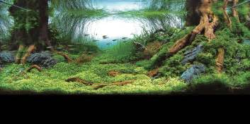 allestimento acquari marini