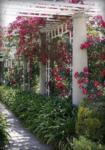 trellis roses trellis landscape backyard sideyard garden