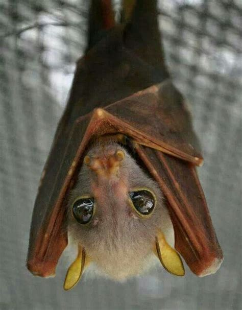 204 best images about bats and their homes on pinterest