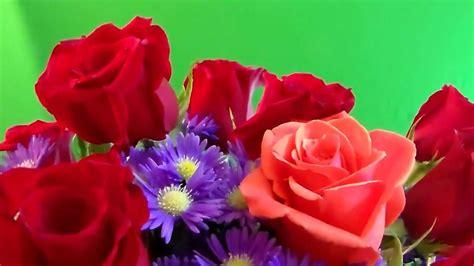 imagenes de rosas reales real flowers quot free chroma key effects quot flores