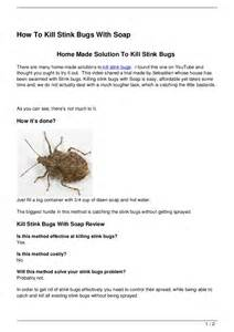 Bug Vaccum How To Kill Stink Bugs With Soap