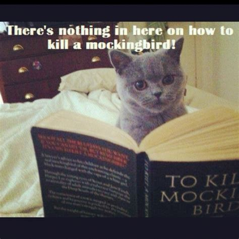 To Kill A Mockingbird Cat Meme - 1000 images about to kill a mockingbird unit on pinterest