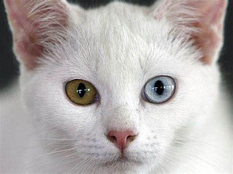 libro the white cat and clase 20 las mutaciones