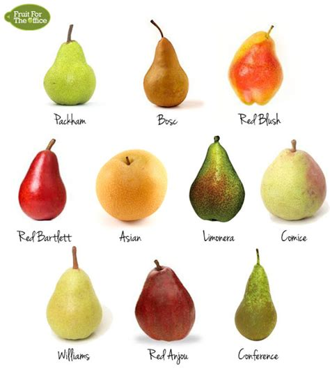 3 fruit types fruit for the office 10 types of pears