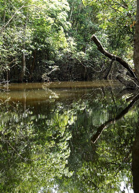 amazon rainforest many means amazon rainforest quot lungs of our planet quot