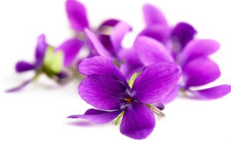 fiore viole dicono di archivi costanza savarese