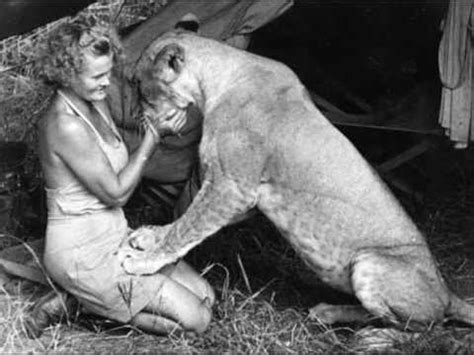 elsa film lioness tribute to george and joy adamson elsa the lioness and