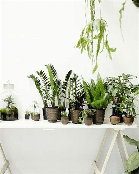 Zimmerpflanzen Deko Ideen by Zimmergr 252 Npflanzen Bilder Und Inspirierende Deko Ideen