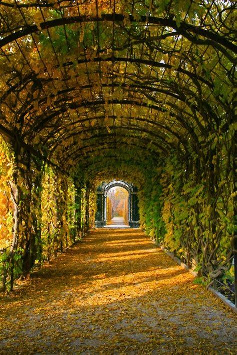 tree tunnel schonbrunn gardens vienna austria  pictures