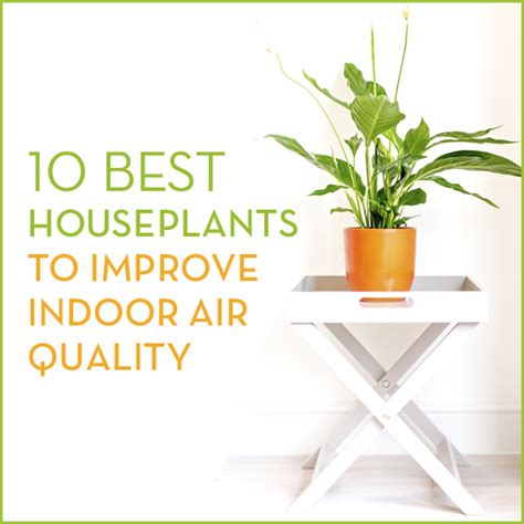 best houseplants for air quality 10 best houseplants to improve air quality