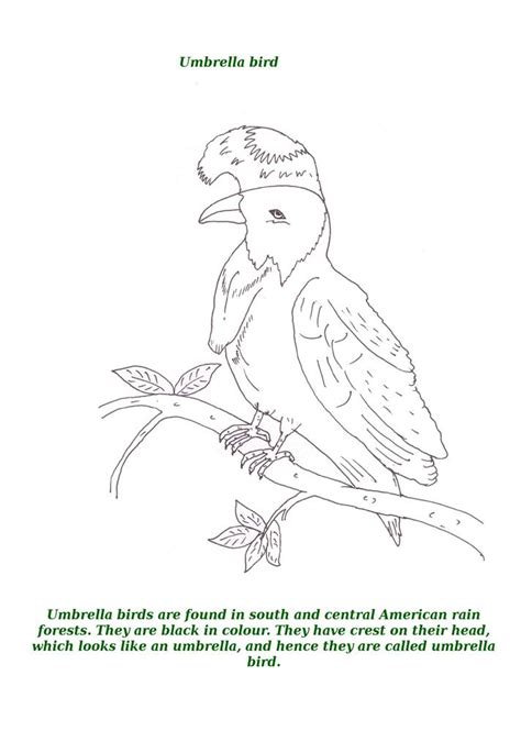 umbrella of birds colouring pages
