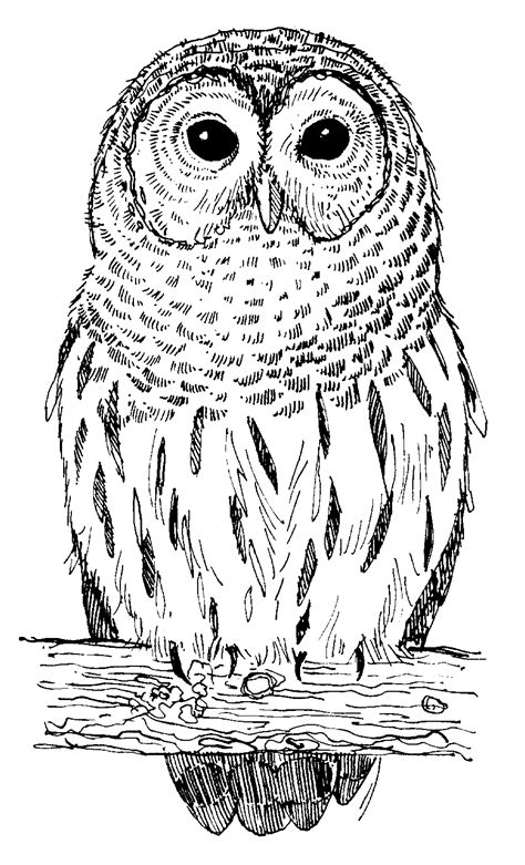 owls pictures pics images     tattoo
