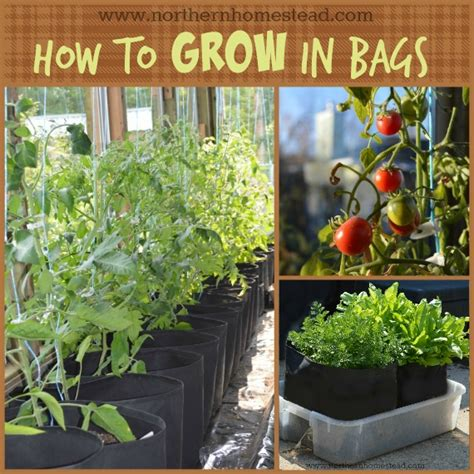 how to grow in grow bags northern homestead