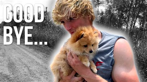 logan paul puppy logan paul on quot i can t keep him go the new vlog https t