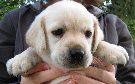 i need a puppy i need a puppy