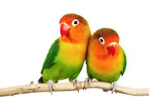 Beautiful colorful birds new fresh background wallpapers male models