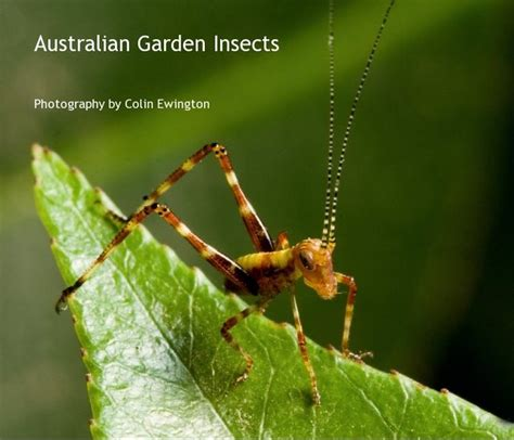 Garden Insects by Australian Garden Insects Blurb Books Australia