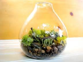 build a terrarium for a some freshness