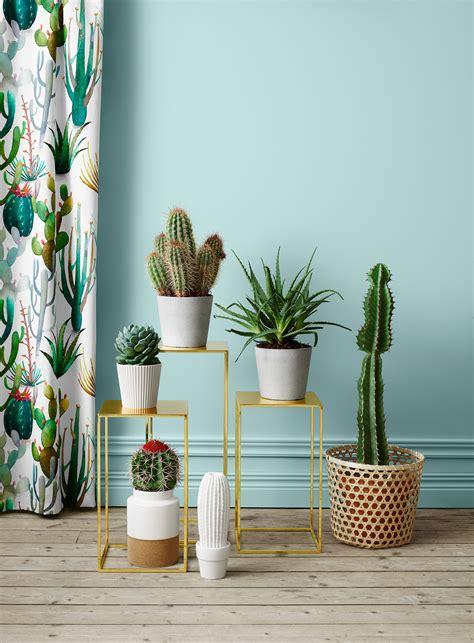 plants for decorating home foto quot pinnata quot dai nostri lettori emanuela e fabio di